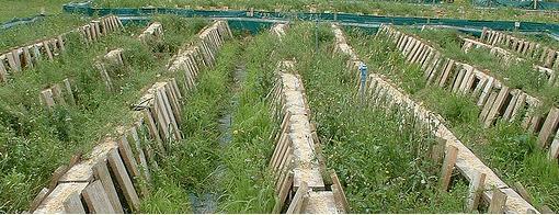 cr a de caracoles una oportunidad para nuevos On montar granja de caracoles