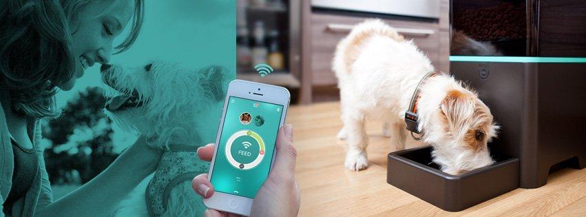 Petnet ayuda a las mascotas con sobrepeso. ¿Cuánto tardarás en instaurarlo en España?