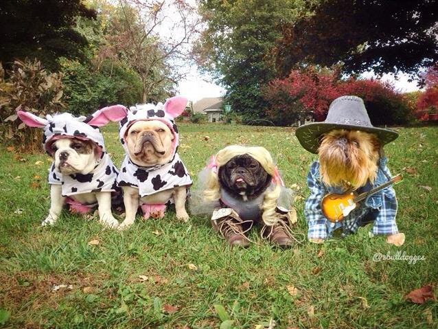 Si te gustan los animales, céntrate en el mundo de los perros imitando a Bark & Co