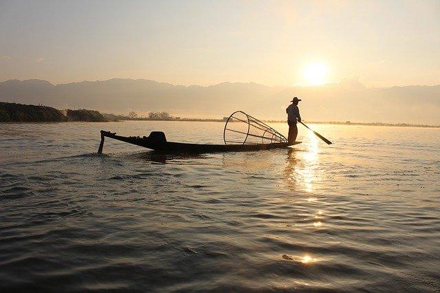 Emprendedores japoneses crean un aparato que detecta cuáles son los pescados más sabrosos