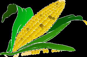 Emprender en agricultura: ¿cuáles son las ventajas?
