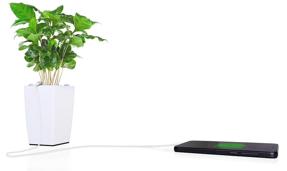 Emprendedores canarios crean una maceta que puede cargar la batería del móvil
