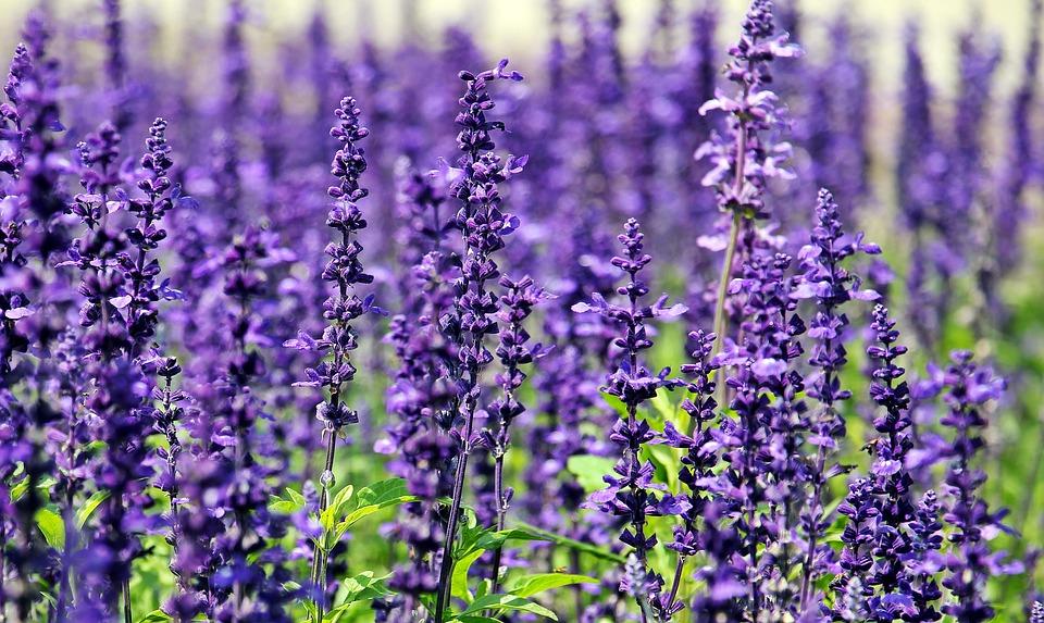 5 plantas relajantes que te ayudarán a combatir los nervios