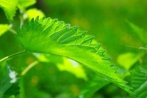 Las mejores plantas medicinales para el cuidado de la vista