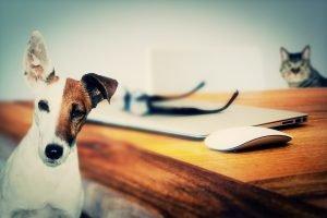 ¿Te encantan los animales y quieres emprender? Monta una farmacia on-line para mascotas