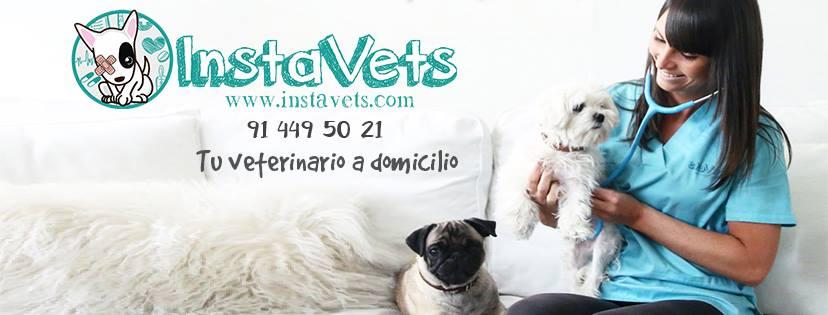 InstaVets, una empresa de veterinarios a domicilio que se expande por el territorio español