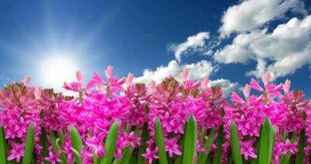 5 consejos para combatir los síntomas de la astenia primaveral