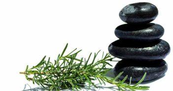 5 plantas medicinales que reducen el cansancio y la fatiga