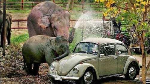 Emprendiendo con la limpieza de coches a mano