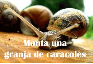 Rentabilidad del Proyecto de la cría de caracoles