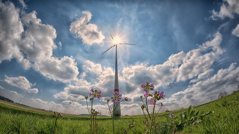 El medio ambiente, un sector en auge perfecto para emprender