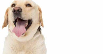 ¿Quieres emprender en el universo de las mascotas? Inspírate en Barkbox