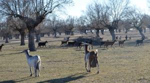 Crea tu parque temático rural granjero