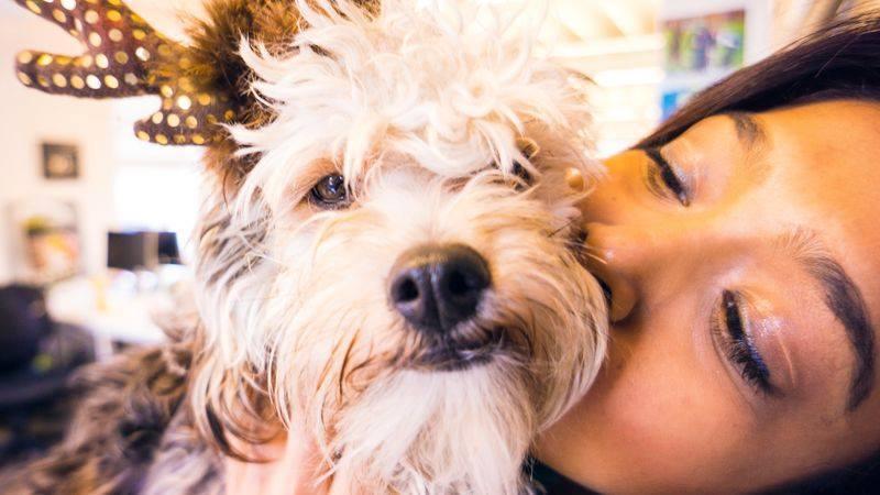 Alarga la vida de nuestras mascotas con un producto como Whistle