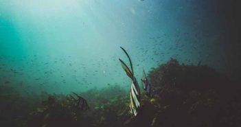 La obsesión por las algas que se convirtió en negocio