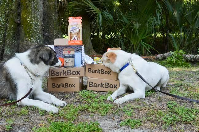 Gana 15 millones creando cajas de suscripción para mascotas como las de BarkBox