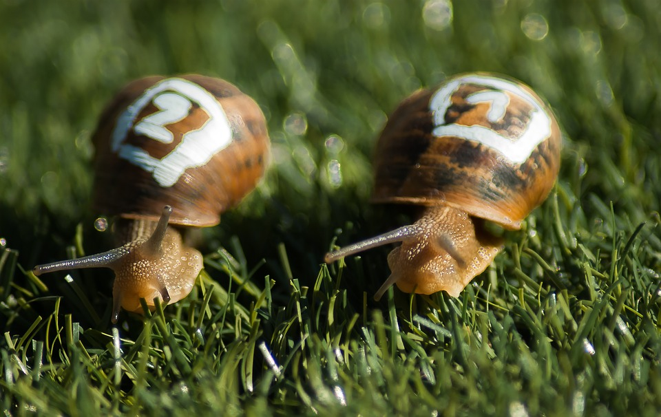 Cría de caracoles, una oportunidad para nuevos emprendedores