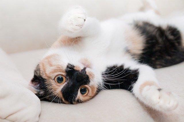 Cat Street View, una aplicación con la que sentirás que eres un felino