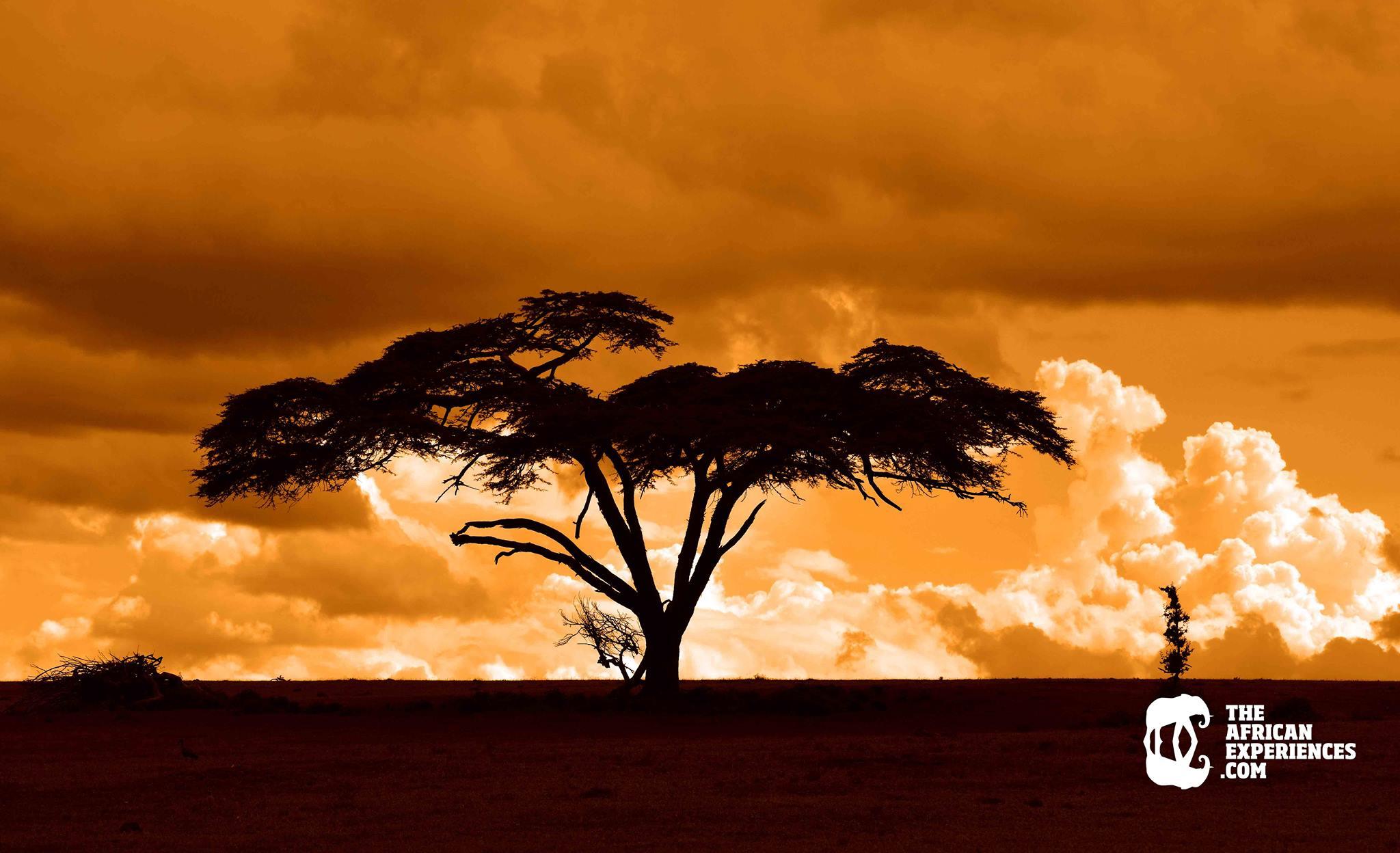 Encuentra inspiración para emprender realizando un viaje por Kenia