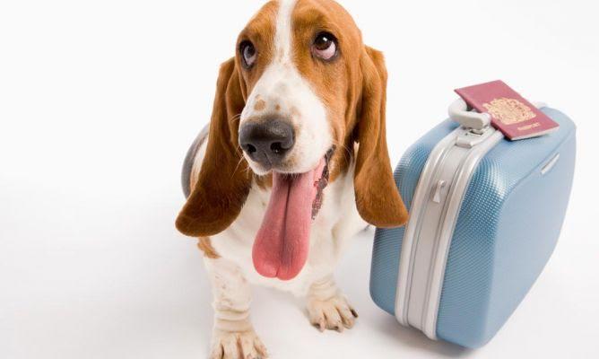 Los emprendedores de Pet&Net nos ayudan a encontrar al cuidador de mascotas perfecto