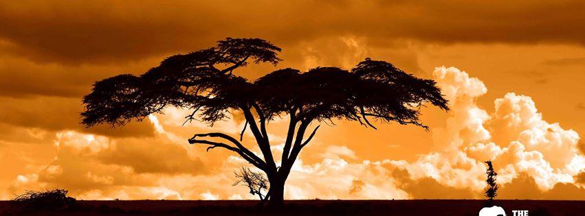 TheAfricanExperiences.com ofrece safaris adaptados para personas con discapacidad
