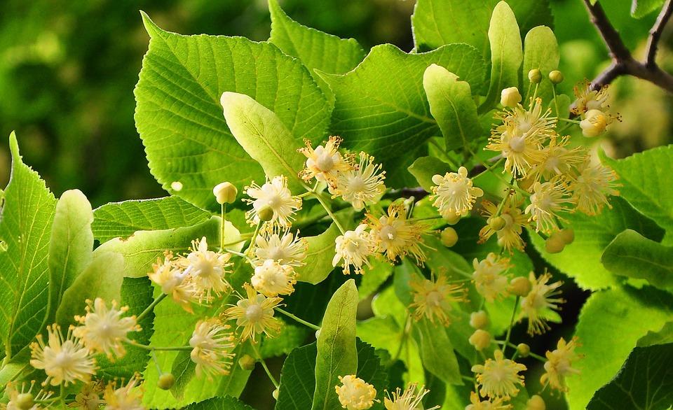 Las mejores plantas para combatir el estrés
