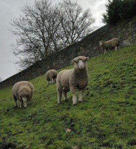 Una granja escocesa obtiene más de 50.000 euros a través del crowdfunding