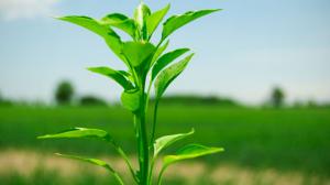 Plantas que te proporcionarán salud y bienestar, necesario para emprender y vivir más!