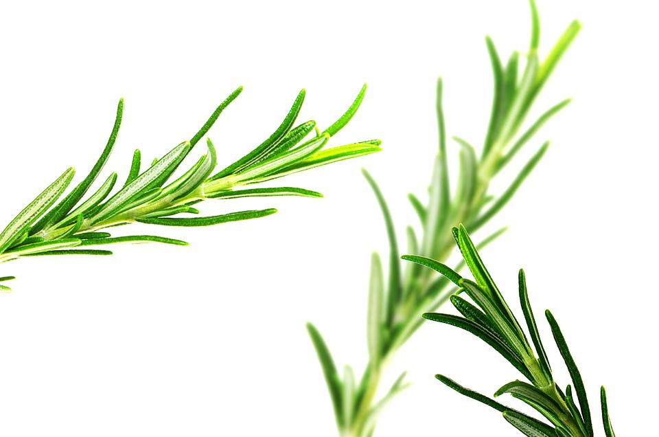 4 plantas que te ayudarán a aumentar la energía