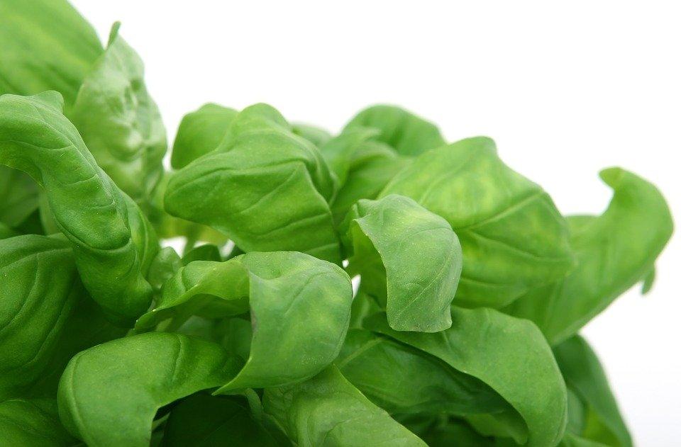 5 plantas que mejoran la concentración