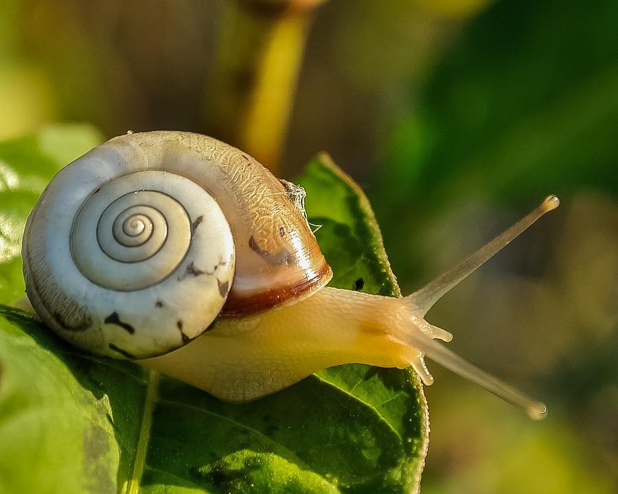 5 beneficios de la helicicultura o cría de caracoles