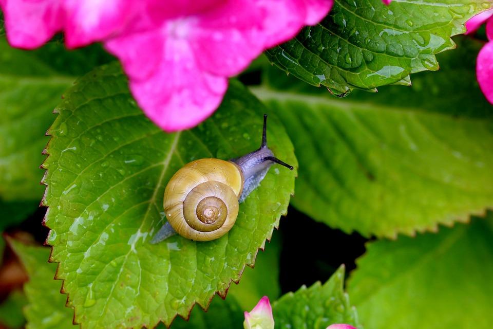 Cómo emprender con una granja de caracoles