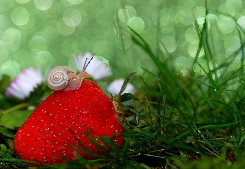 5 good reasons to open a snail farm