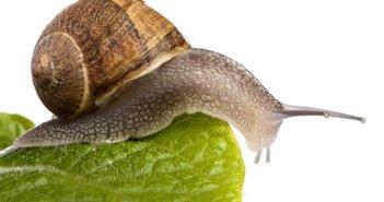 5 buenos motivos para abrir una granja de caracoles