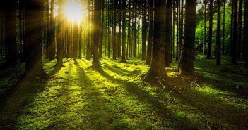 La marca de cosmética natural Freshly Cosmetics se propone plantar 12.000 árboles