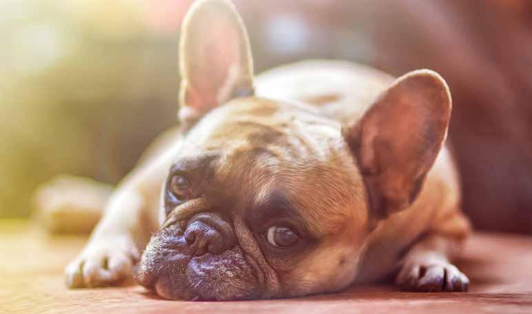 Toppercan, una web con información del mundo canino creada por la emprendedora Marisa Rodríguez