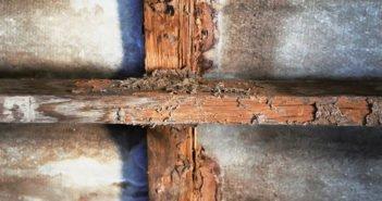 Consejos para prevenir las plagas de termitas - Diario de Emprendedores