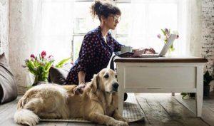 Crean Ocio Digital, un portal que reúne propuestas de ocio virtuales gratuitas - Diario de Emprendedores