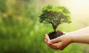 Treedom permite plantar un árbol de forma remota - Diario de Emprendedores
