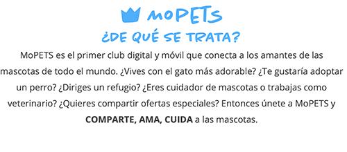 Llega a España MoPETS, la plataforma para amantes de los animales - Diario de Emprendedores